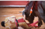 Video shows bull goring matador, inserting horn into his rectum